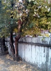 tree_fence
