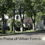 In Praise of Urban Forests