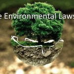 How Are Environmental Laws Made?
